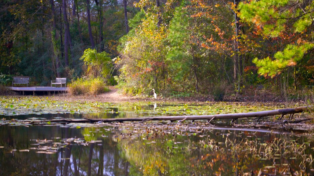 Houston Arboretum and Nature Center showing a pond, a lake or waterhole and landscape views