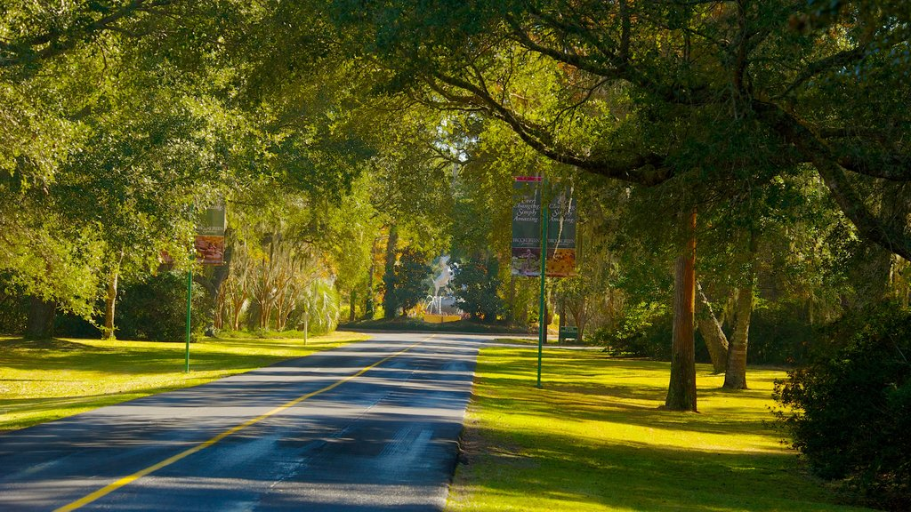 South Carolina which includes tranquil scenes and a garden