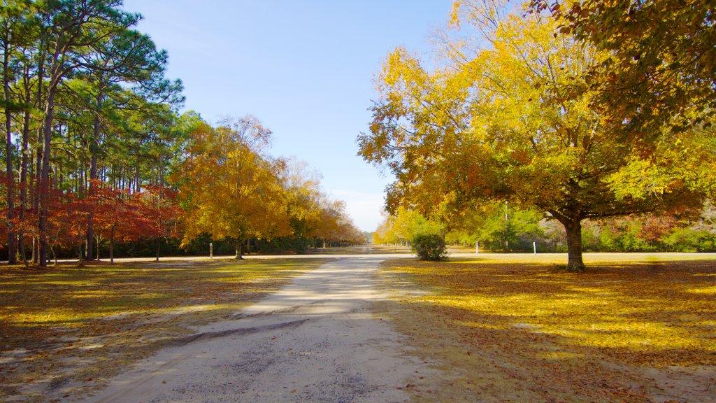 Brookgreen Gardens ofreciendo los colores del otoño, un parque y vistas de paisajes