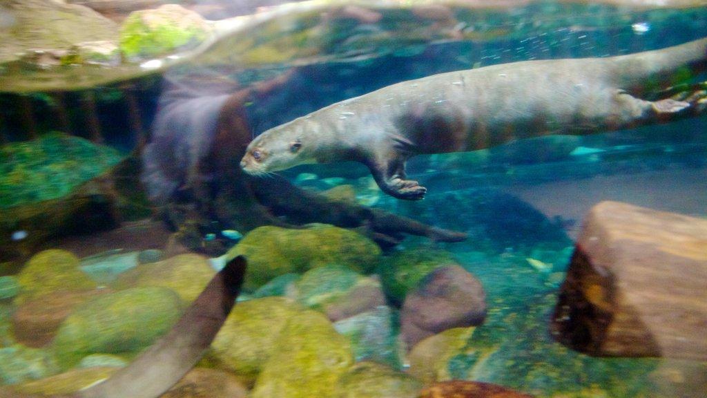 Dallas World Aquarium showing marine life