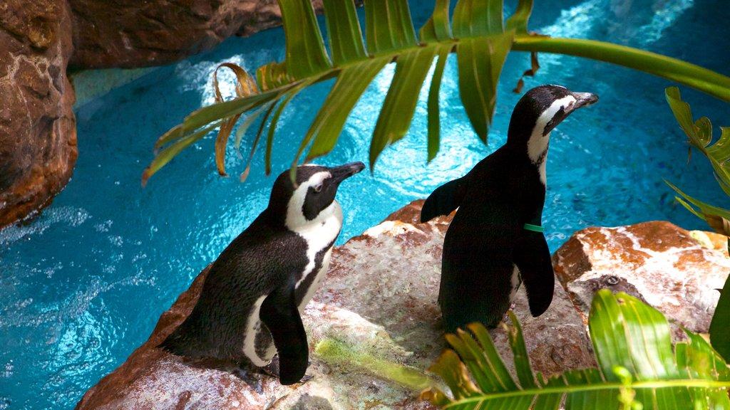 Dallas World Aquarium showing marine life and rugged coastline