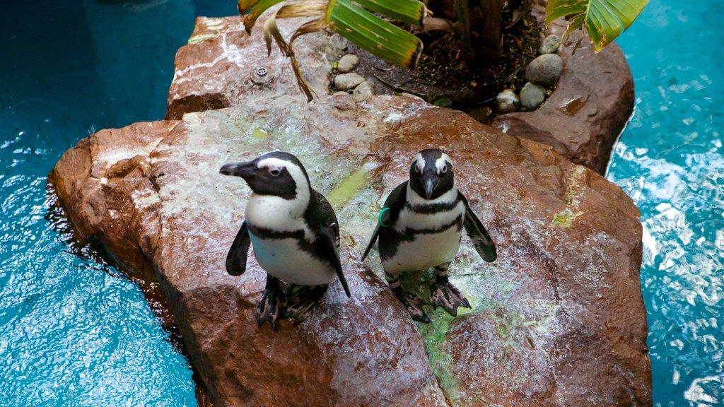 Dallas World Aquarium which includes marine life