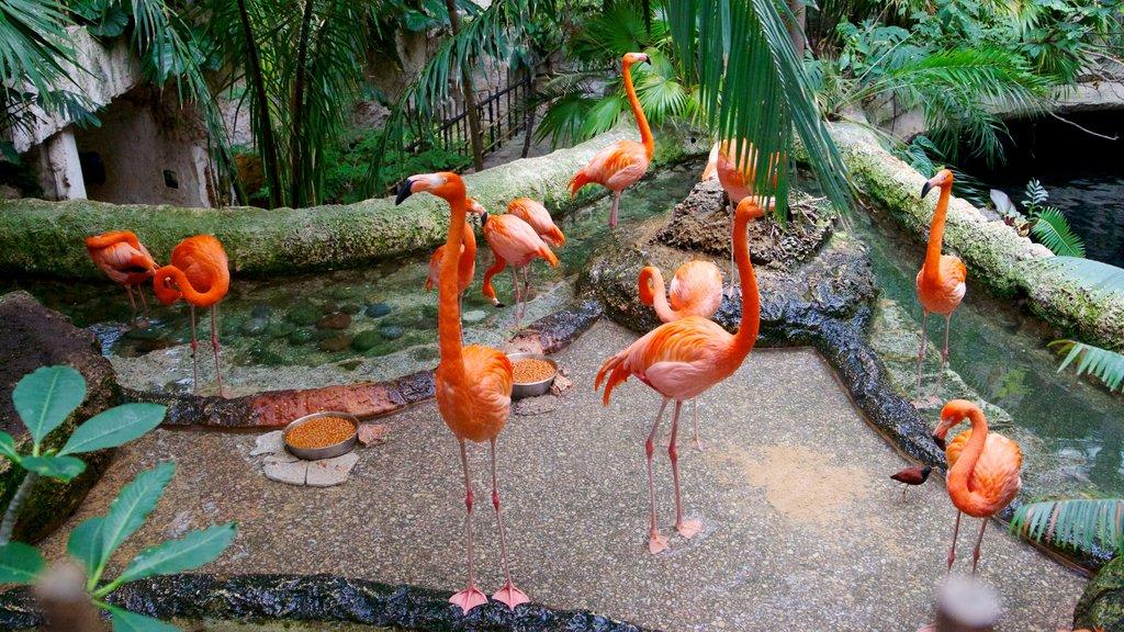 Dallas World Aquarium showing marine life, bird life and zoo animals