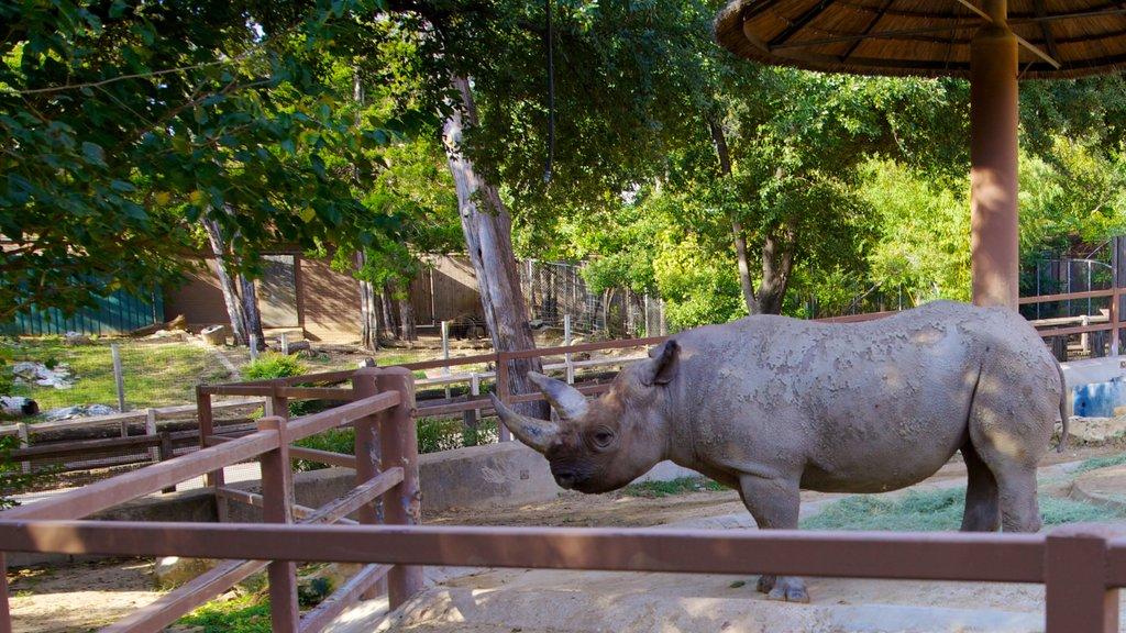 Zoológico de Dallas ofreciendo animales terrestres y animales del zoológico