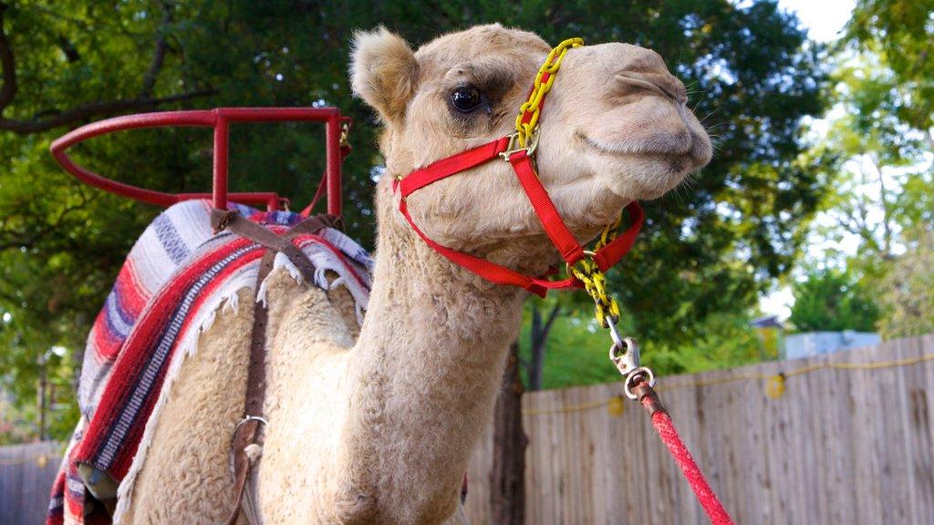Zoológico de Dallas ofreciendo animales del zoológico y animales terrestres
