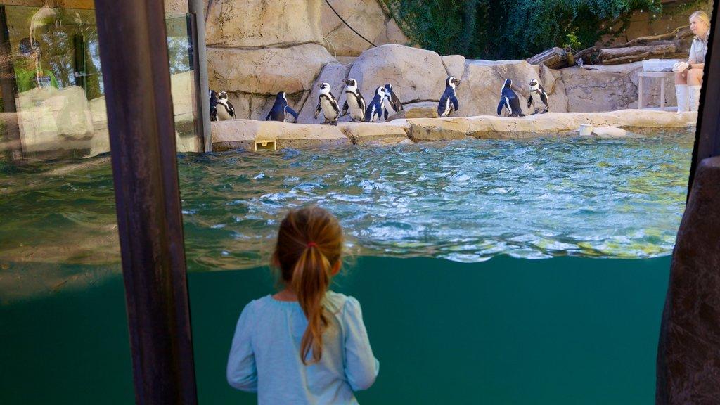 Zoológico de Dallas que incluye animales del zoológico y vida marina y también un niño