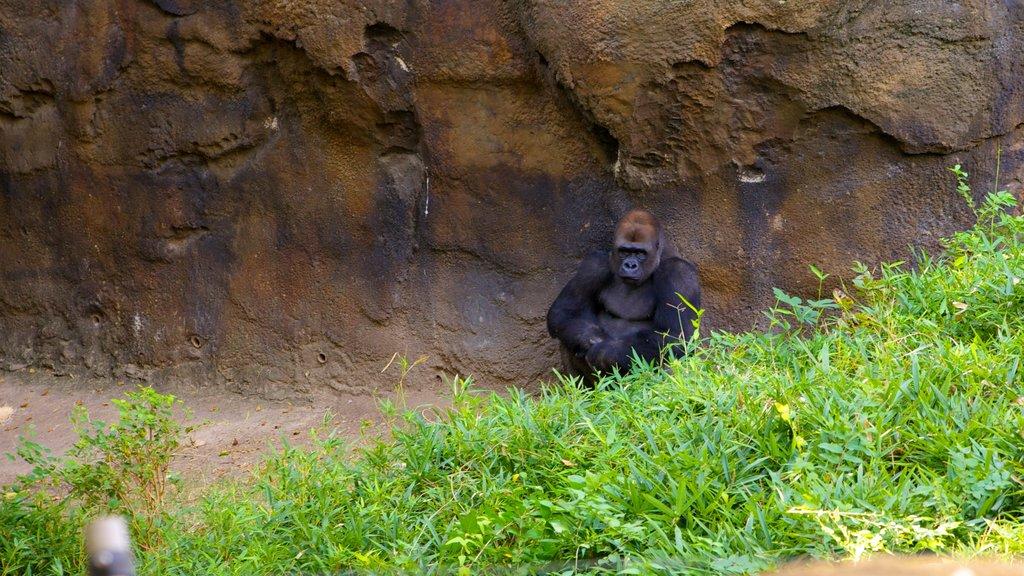 Zoológico de Dallas mostrando animales del zoológico