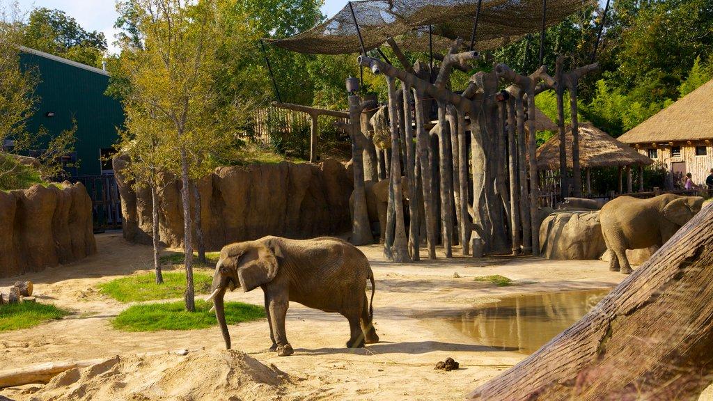 Zoológico de Dallas ofreciendo vistas de paisajes, animales terrestres y animales del zoológico