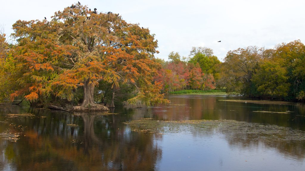 Landa Park which includes a lake or waterhole, a park and landscape views