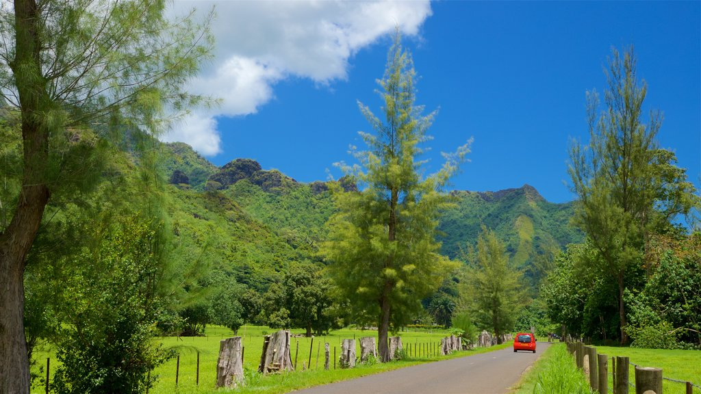 Moorea showing tranquil scenes