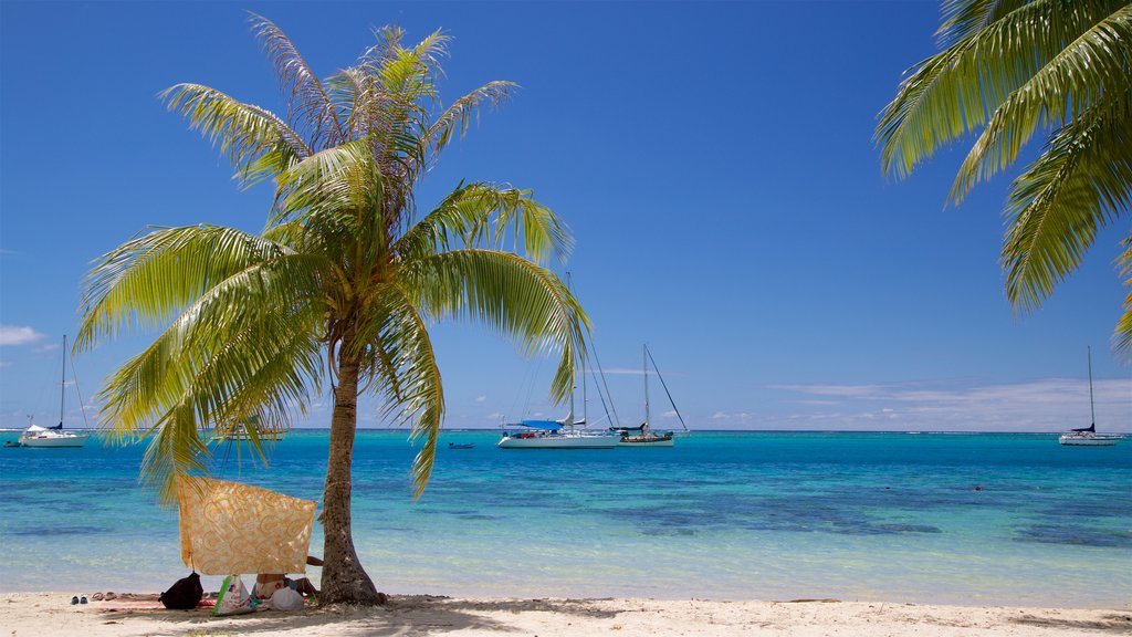 Moorea showing a sandy beach, general coastal views and tropical scenes