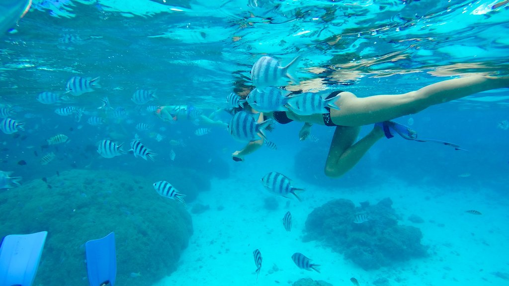 Bora Bora which includes marine life and snorkeling as well as an individual femail