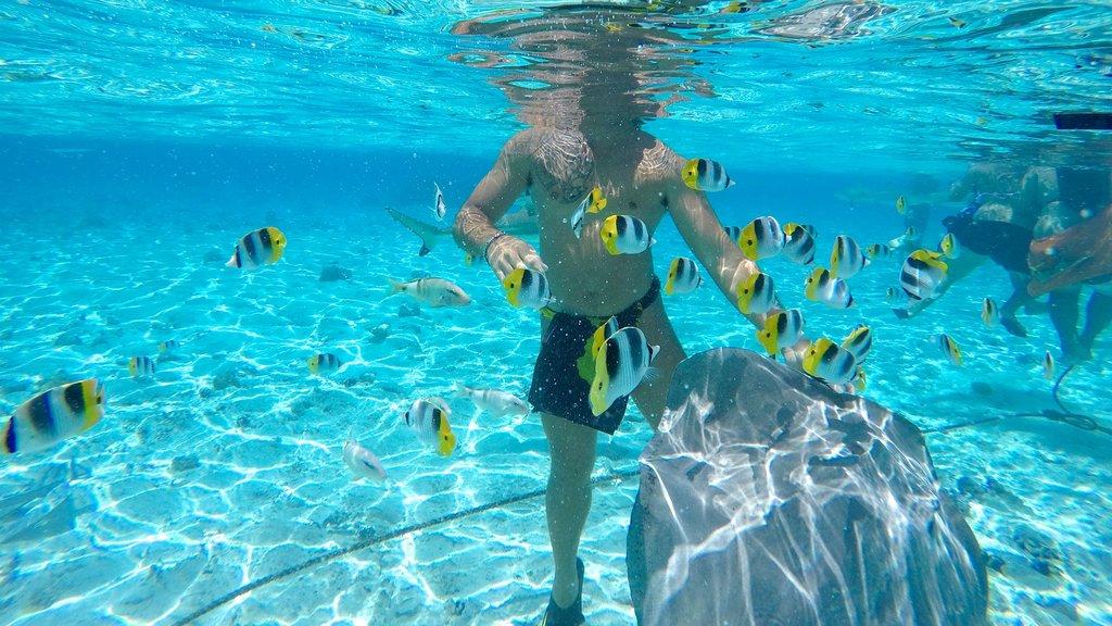 Bora Bora mostrando natación y vida marina y también un hombre