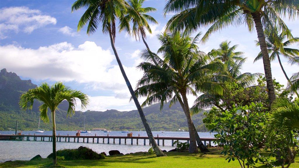 Bora Bora que incluye un río o arroyo, un parque y escenas tropicales