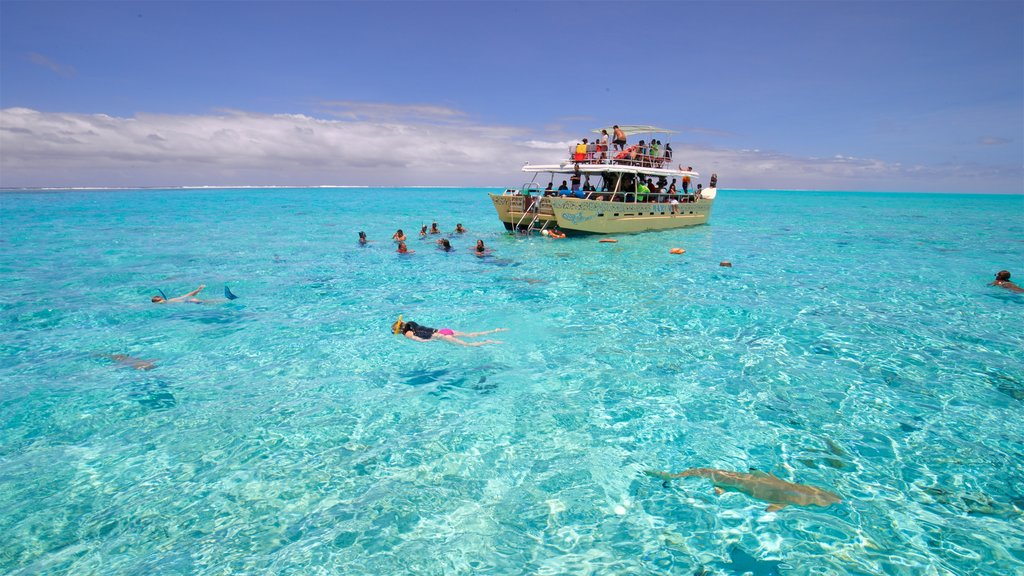 Bora Bora showing tropical scenes, marine life and swimming