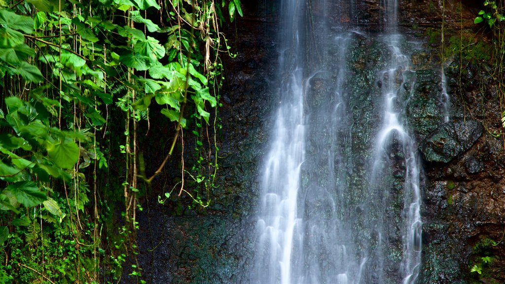 The Water Gardens of Vaipahi which includes a waterfall