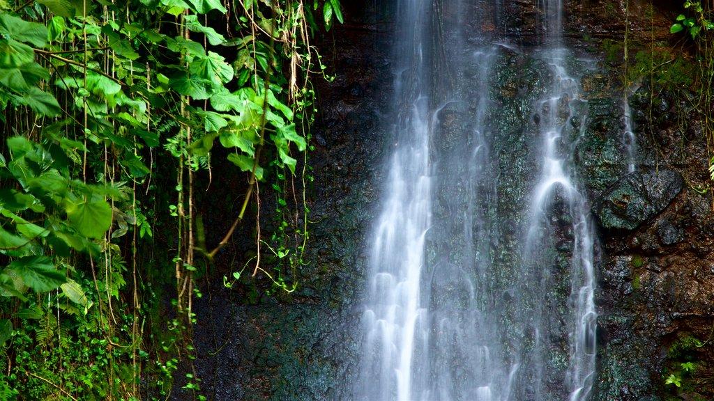 Jardines de agua de Vaipahi ofreciendo una catarata