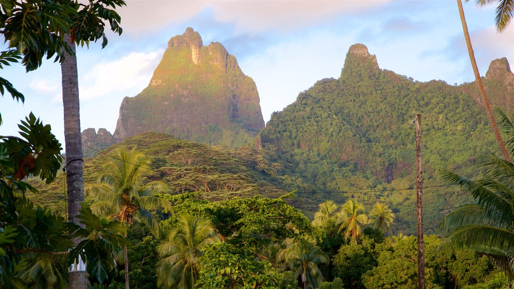 Moorea showing tropical scenes, tranquil scenes and mountains
