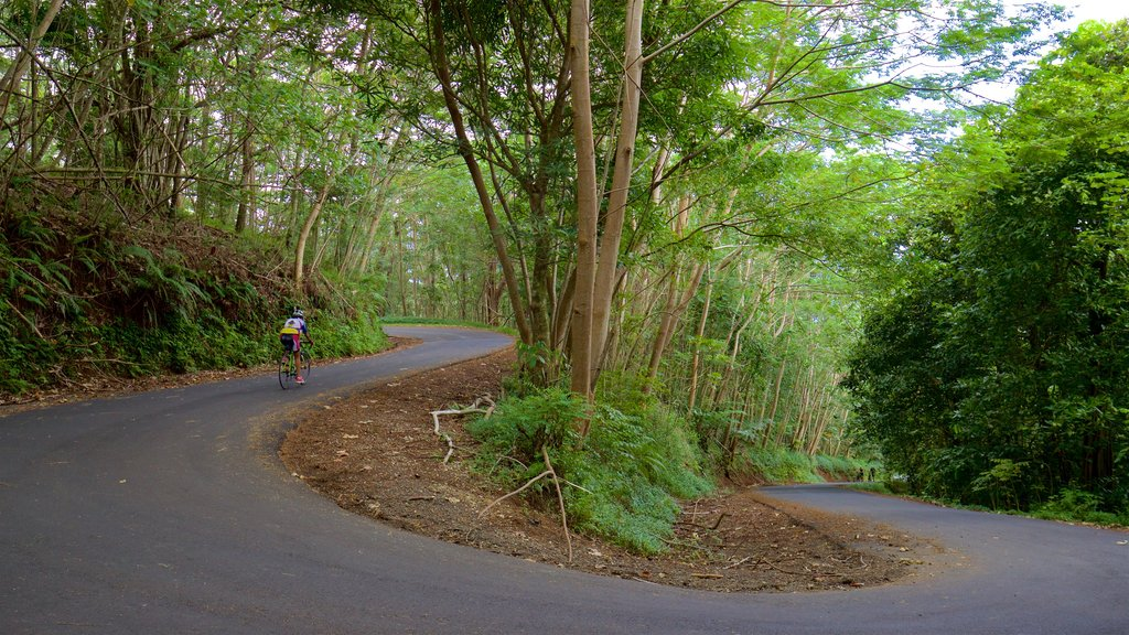 Moorea featuring road cycling and forest scenes