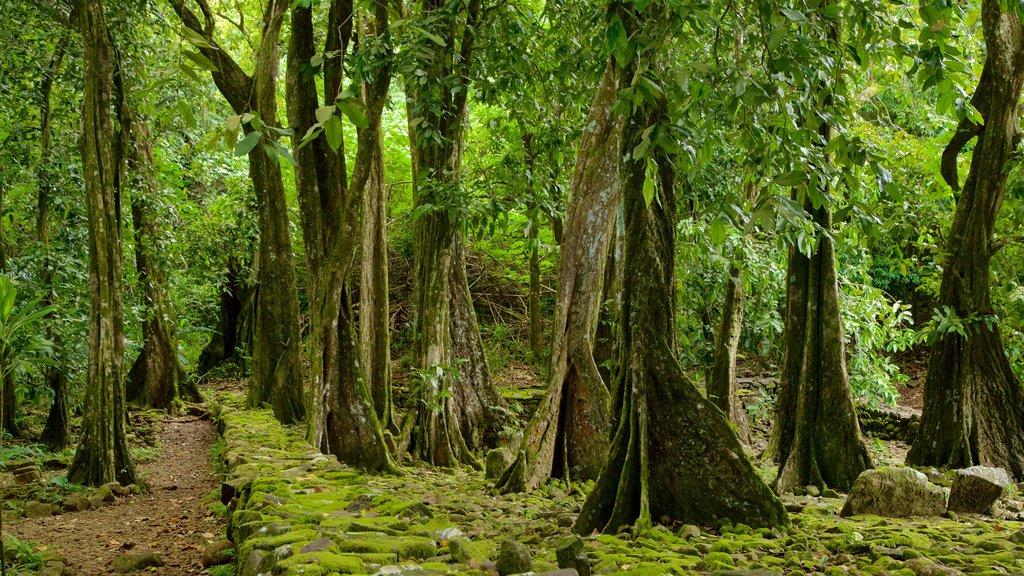 Moorea featuring forest scenes