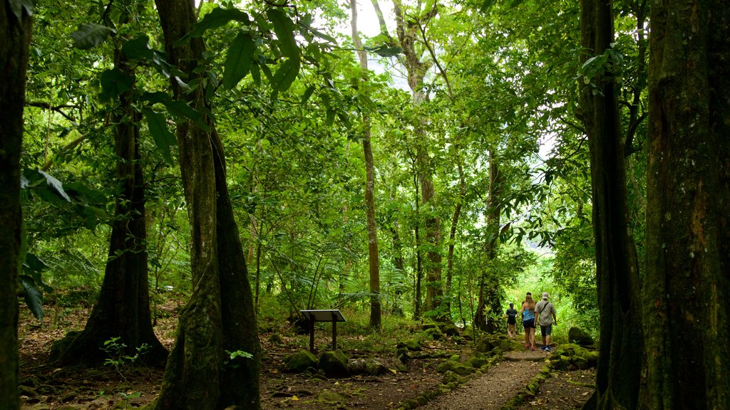 Moorea showing forest scenes and hiking or walking as well as a small group of people