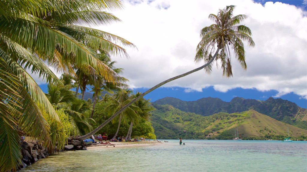 Moorea which includes tropical scenes, tranquil scenes and general coastal views