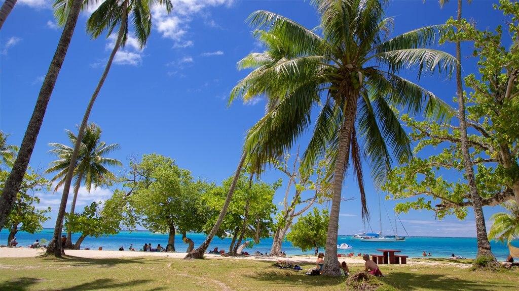 Moorea mostrando un jardín, vistas generales de la costa y escenas tropicales