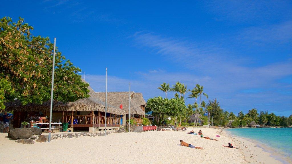 Matira Beach showing a beach, tropical scenes and general coastal views
