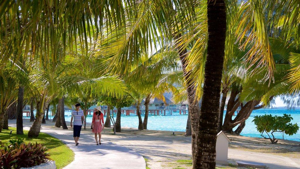 Playa de Le Meridien que incluye vistas generales de la costa y escenas tropicales y también una pareja