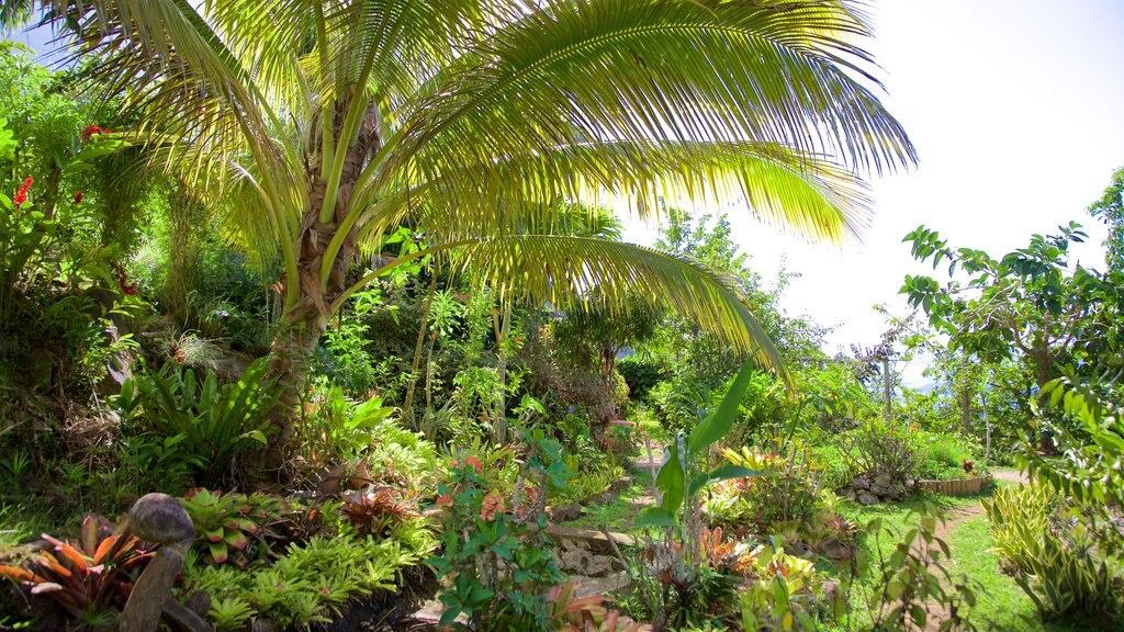 Otumai showing a garden