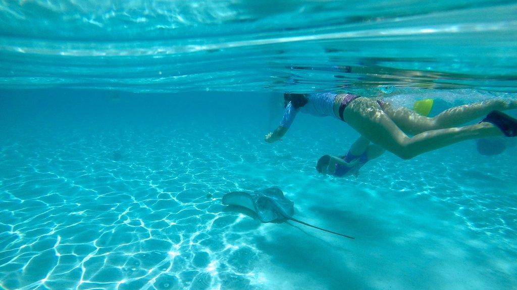 Tiahura Beach showing tropical scenes, marine life and snorkeling