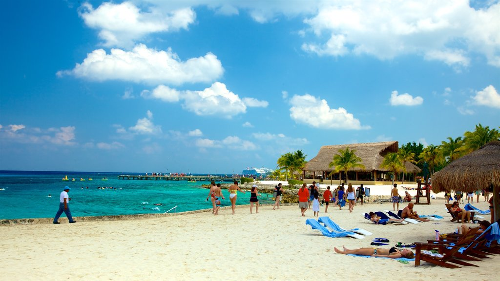 Cozumel showing a sandy beach, tropical scenes and general coastal views
