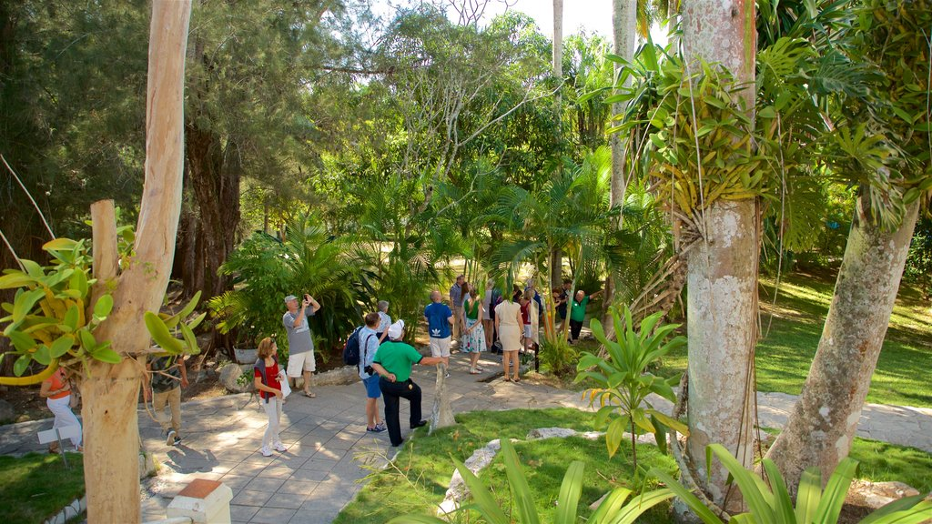 Ernest Hemingway Museum featuring a park as well as a small group of people