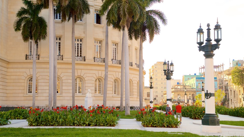 Capitolio Nacional showing a park, heritage elements and wildflowers