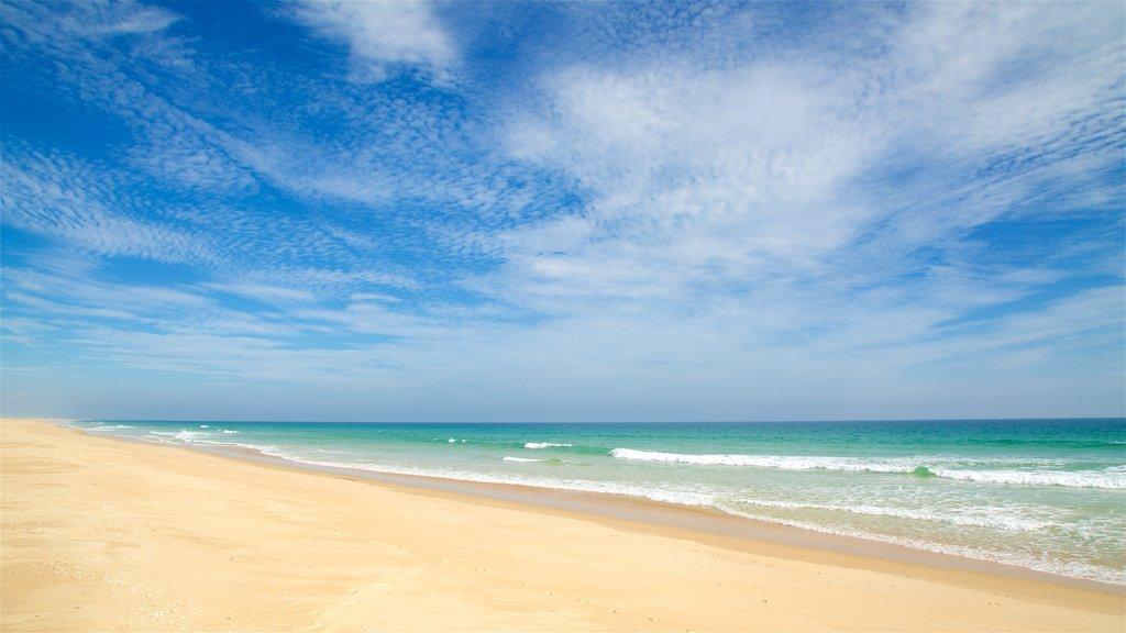Terra Estreita Beach featuring general coastal views and a sandy beach