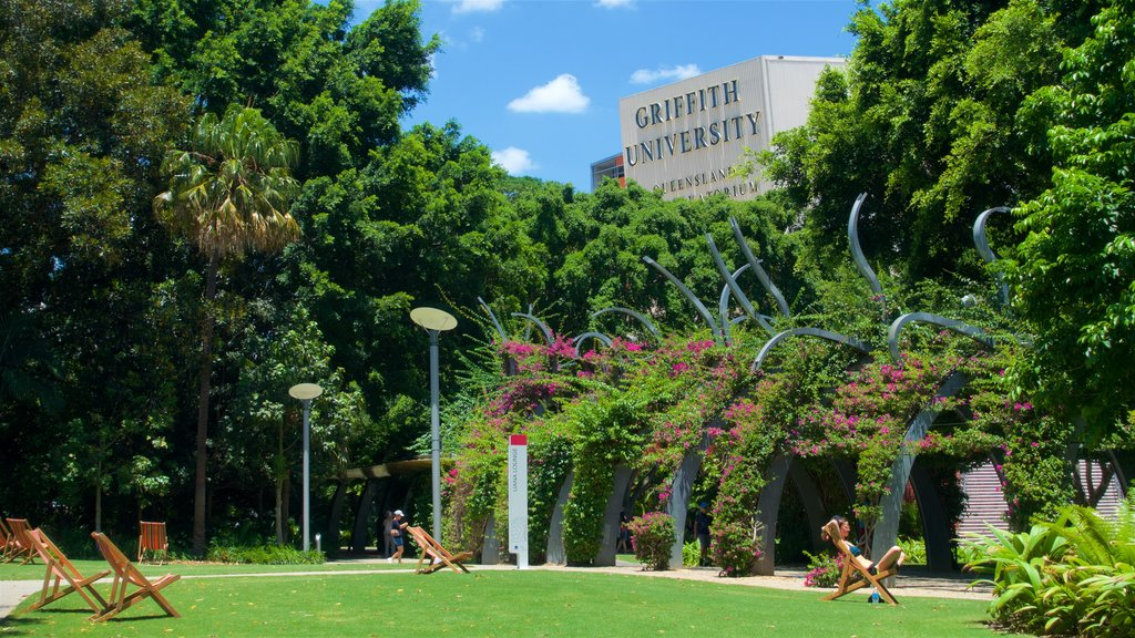 Southbank Parklands showing a garden and wildflowers