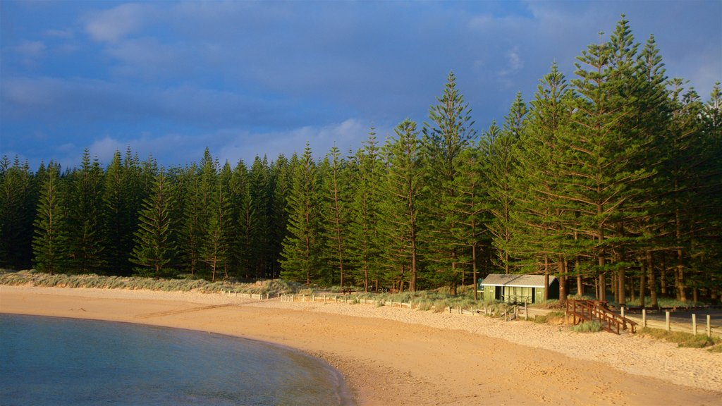 Emily Bay Beach which includes general coastal views, forests and a sandy beach