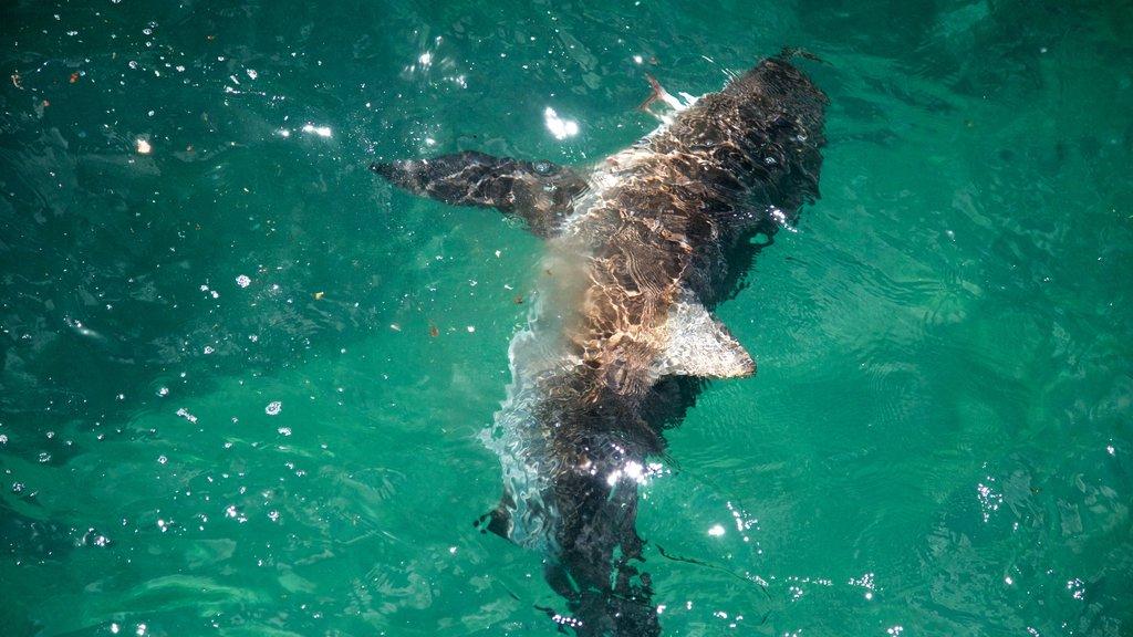 Norfolk Island featuring marine life and general coastal views