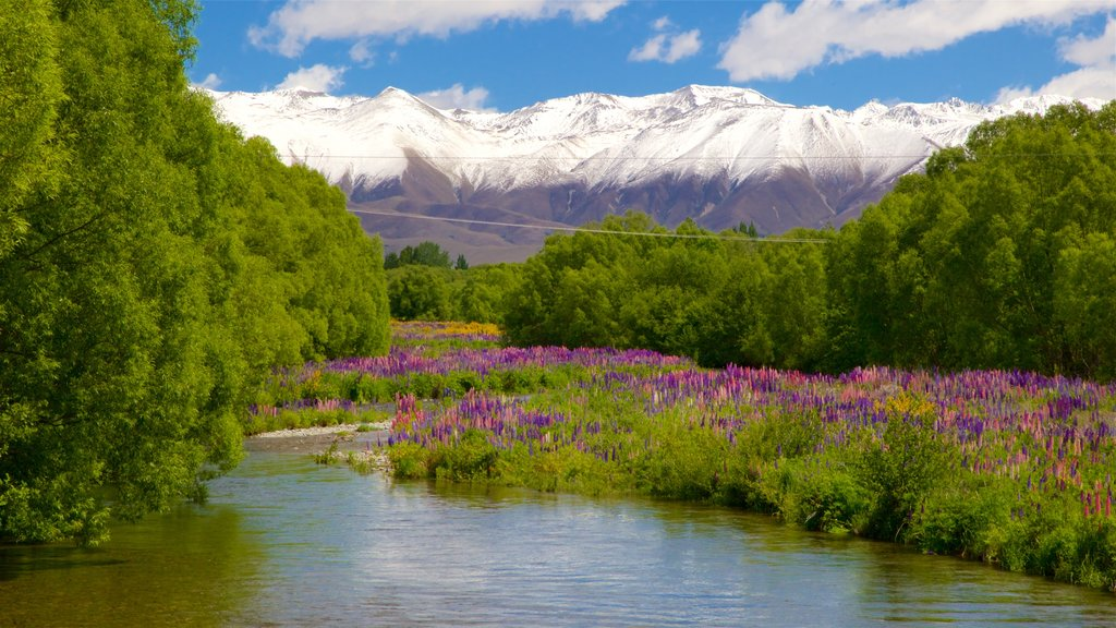 Canterbury featuring a river or creek, wildflowers and snow