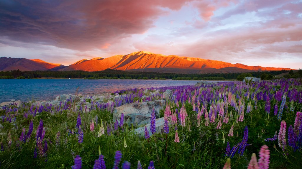 Canterbury showing wildflowers, a lake or waterhole and a sunset