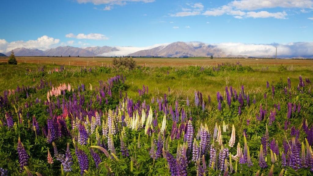 Canterbury ofreciendo vistas de paisajes, escenas tranquilas y flores silvestres