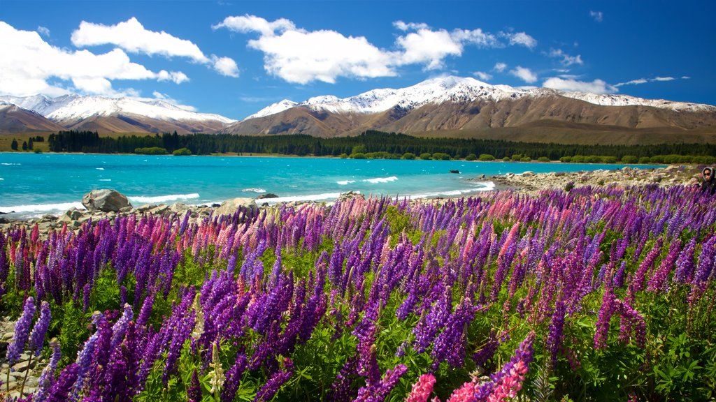 Lake Tekapo which includes mountains, a lake or waterhole and wildflowers