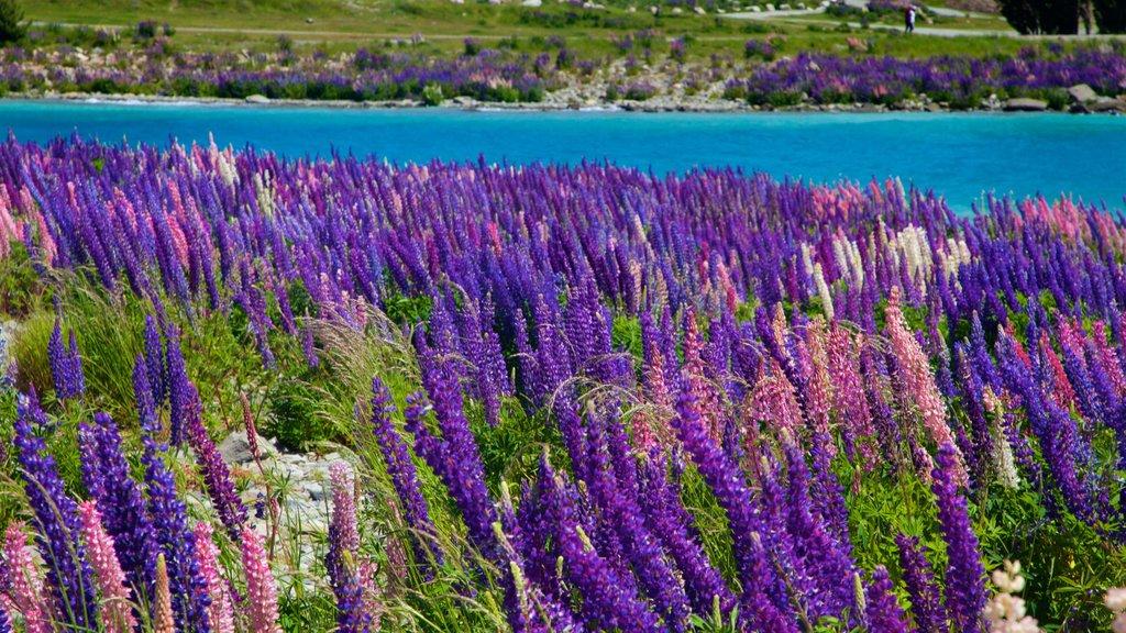 Lake Tekapo featuring a lake or waterhole and wildflowers