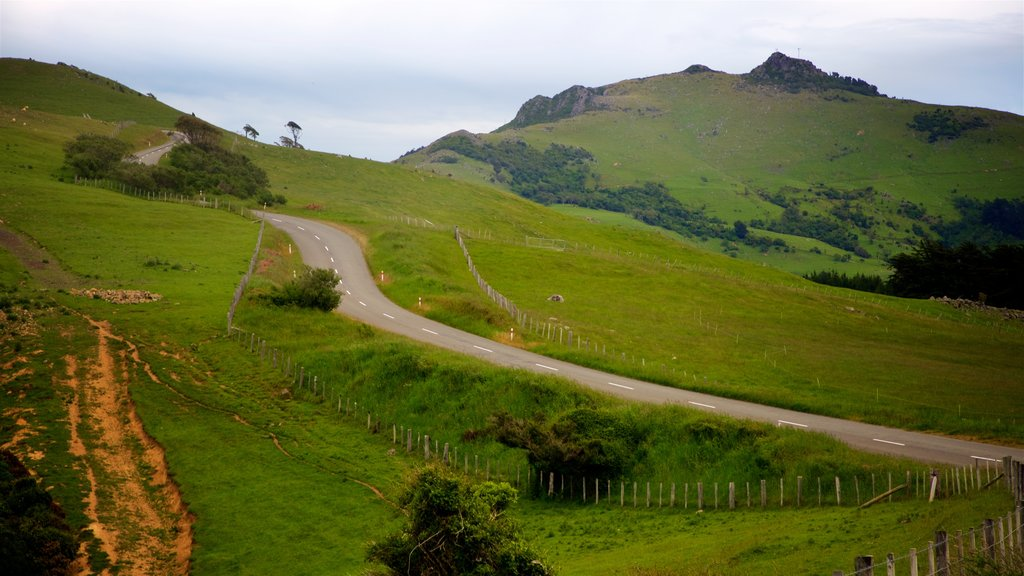 Akaroa que incluye vistas de paisajes y escenas tranquilas