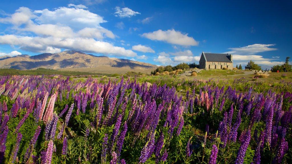 Church of the Good Shepherd ofreciendo escenas tranquilas y flores silvestres