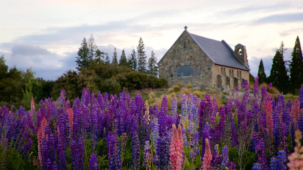 Church of the Good Shepherd showing a church or cathedral, heritage elements and wildflowers