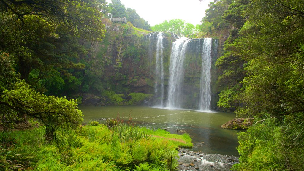 Whangarei Falls which includes a river or creek and a cascade