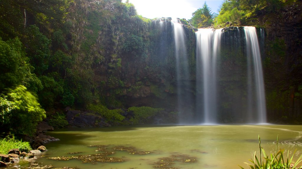 Whangarei Falls showing a waterfall and a river or creek