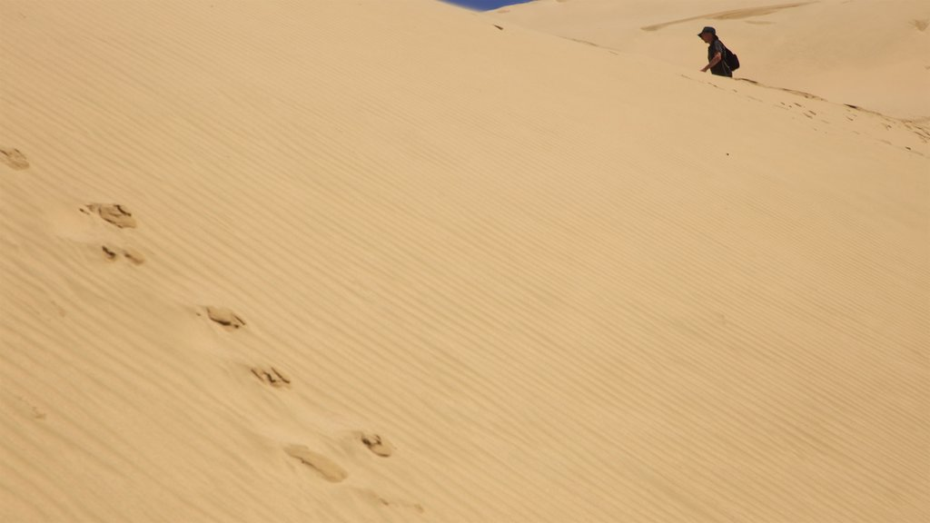 Te Paki Sand Dunes featuring desert views as well as an individual male