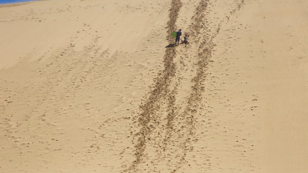 Te Paki Sand Dunes showing desert views as well as a couple